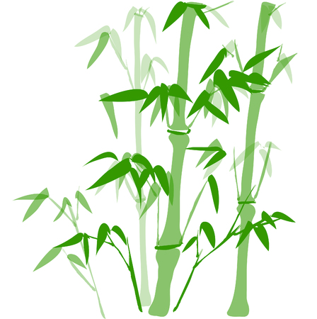 meticulous: bamboo Illustration