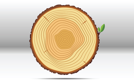 Tree growth rings with green leaf wood Stok Fotoğraf - 58215922
