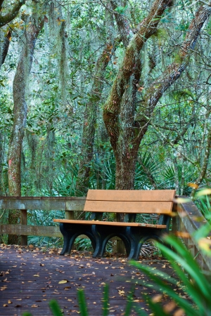 yellow wooden bench in the park  photo