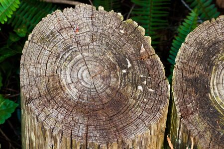 rounded wooden texture outdoors in the garden