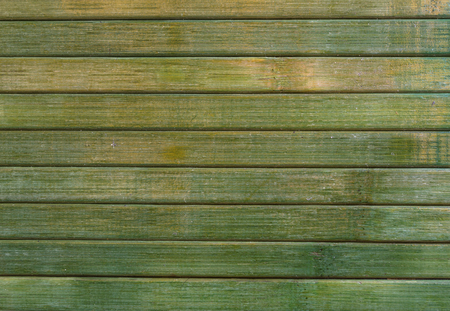 wood texture green photo