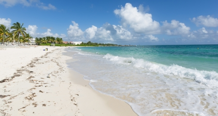 bahamas, beach and nature photo