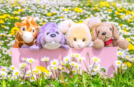 Box full of puppets on a beautiful flowered meadow photo