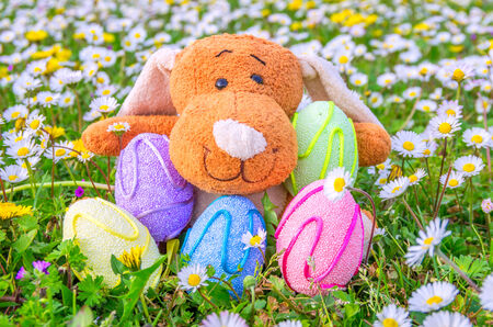 Rabbit and colored easter eggs  photo