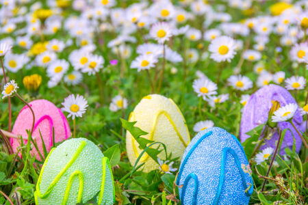 Colored easter eggs on flowered meadow photo