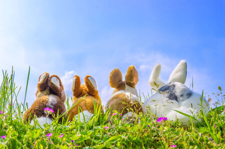 Family of rabbits looking the sky on a green meadow photo