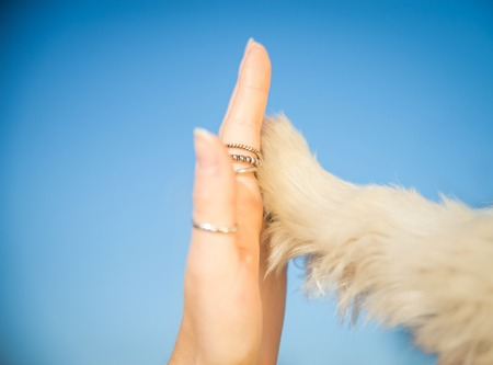 Dog pressing his paw against a womans hand - Give me five Stock Photo