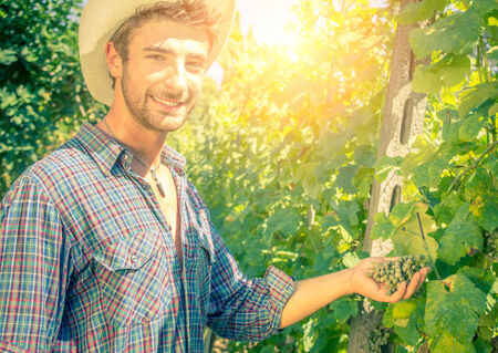 winetasting: Man holding grapes in a vineyard