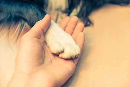 man holding dog paw photo