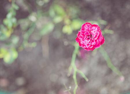 resistence: last flower