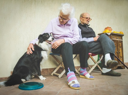 domestic life: Senior couple playing with dog - Grandparents relaxing at home and taking care of playful dog - Candid image of domestic life