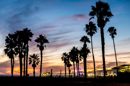 palm trees silhouette: Santa Monica beach and pierat sunset, Los Angeles