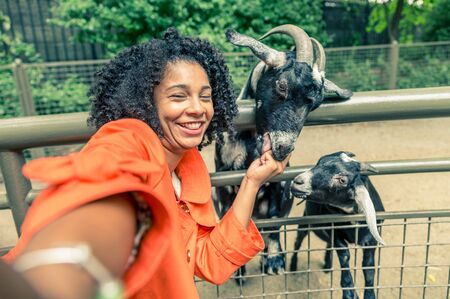 Afro american woman taking a selfie in a zoo - Pretty woman having fun feeding sheeps in a city zoo Stock Photo