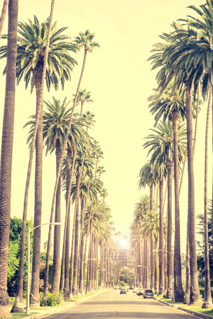Beverly Hills street with palme trees at sunset, Los Angeles Stockfoto