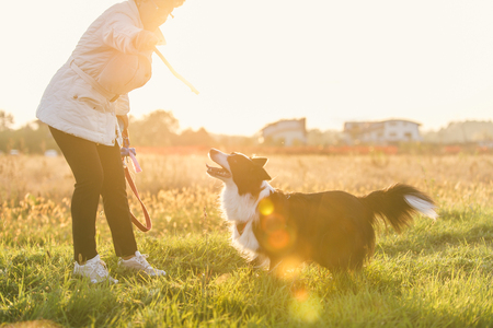 border collie puppy: Middle age woman playing with her border collie dog