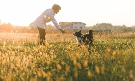 Middelbare leeftijd vrouw speelt met haar border collie hond buiten Stockfoto