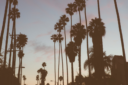 human palm: Beverly hills palms silhouette. Concept about California and travels