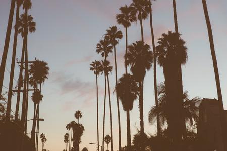 palmier: Beverly Hills paumes silhouette. Concept de la Californie et de voyages Banque d'images