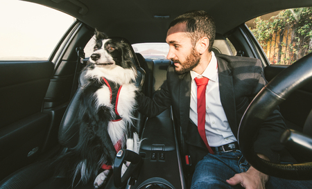 canine: Man motivate his dog before canine competition in the car. Concept about animals and people
