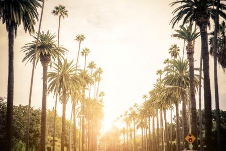 日没、ロサンゼルスでヤシの木が付いているビバリー ・ ヒルズ通り