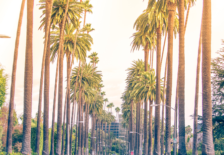 los angeles county: Palm trees in Los angeles Stock Photo