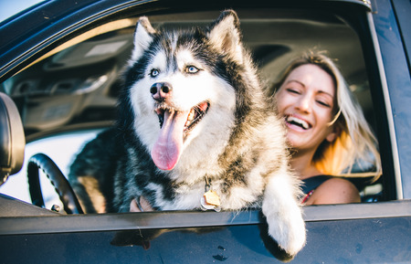 Husky dog and smiling happy woman portrait in the car Stock Photo