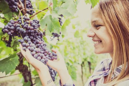 grapevine: Woman harvesting grapevine