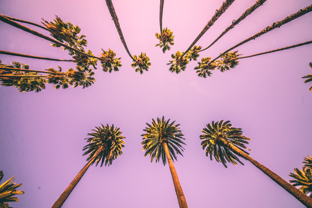 Palm trees and sky Stockfoto