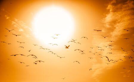 sunset sky: Beautiful sunset sky with birds Stock Photo