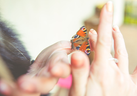Woman hands with butterfly on the fingers Stock Photo