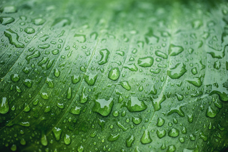 Macro water drops on a leaf during rainy day Foto de archivo