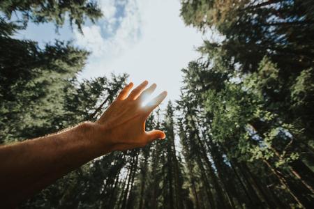 野生の自然に森に目を覚ます