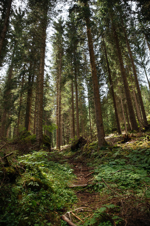 Natural landscape with forest trees Imagens