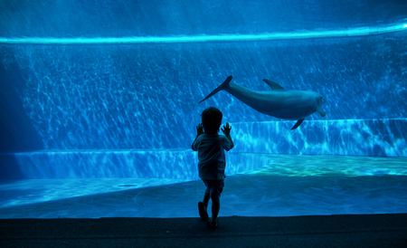 Young kid looking at doplhins swimming in an aquarium Stock Photo - 90598572