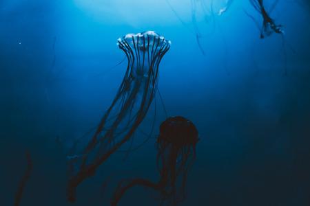深い海で泳ぐクラゲ