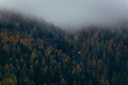 Moody capture of mountain forest with morning mist Stock Photo