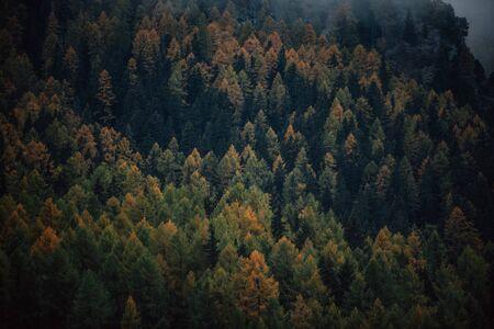 아침 안개와 함께 산 숲의 무디 캡처