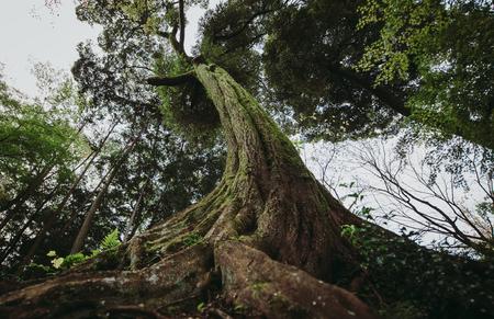 포리스트의 나무입니다. 뿌리에서보기 스톡 콘텐츠