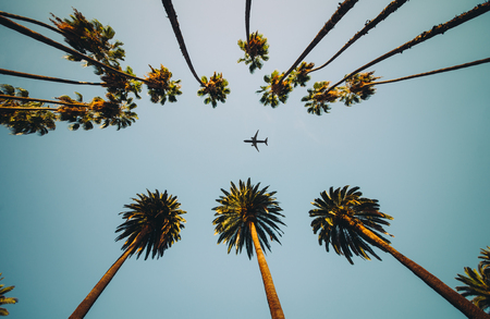 View of palm trees, sky and aircraft flying