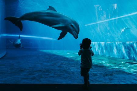 Dolfijnen zwemmen onder water