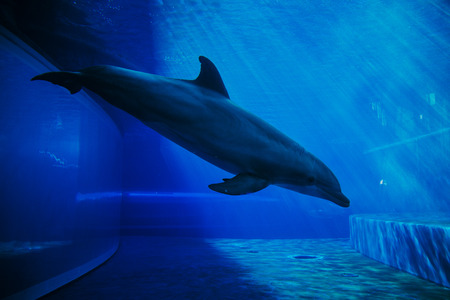 Dolphins swimming underwater Stock Photo - 94765932