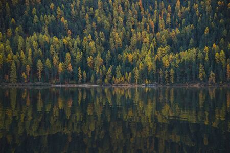 유럽 알프스에서 나무 조성 캡처