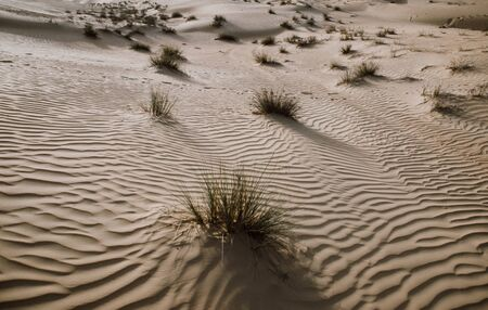Desert sand and dunes