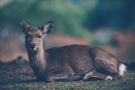 나라 공원, 교토, 일본의 사슴과 동물