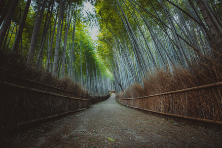 Bamboo forest in Kyoto countryside Stock Photo