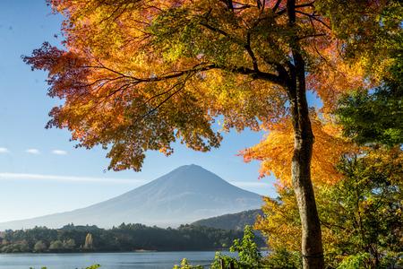 Mount Fuji and natural landscape Archivio Fotografico - 101594006