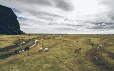 Icelandic green hills and panoramas. Aerial shots with horses Reklamní fotografie - 105532693
