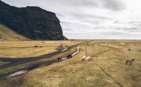Icelandic green hills and panoramas. Aerial shots with horses