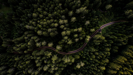 Narrow street between woodland, drones view