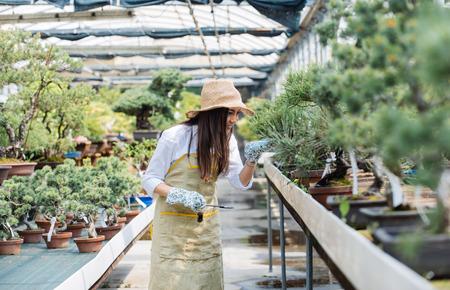 Hübsche Gärtnerin, die sich um Pflanzen in ihrem Blumen- und Pflanzenladen kümmert - asiatische Frau, die in einem Gewächshaus arbeitet Standard-Bild